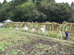 稲刈り-2.jpg