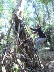 里山の森に秘密基地- - 7_640.jpg