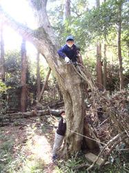 里山の森に秘密基地- - 9_640.jpg